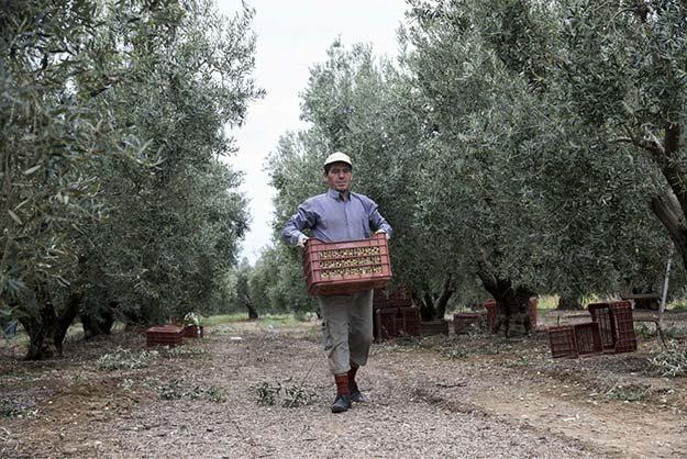 Photo of Αλλαγές στο ειδικό καθεστώς αγροτών- Τι ισχύει με την αίτηση ένταξης για όσους επιθυμούν επιστροφή του φόρου