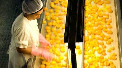 Photo of H βιομηχανία κονσερβοποιίας ΚΟΝΕΞ Α.Ε. αναζητά εργαζόμενους για την παραγωγική περίοδο