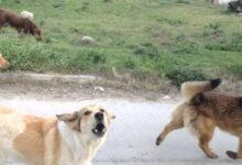 Photo of Αδέσποτα σκυλιά σακάτεψαν ποδηλάτη! Η άγρια επίθεση σε κεντρική πλατεία