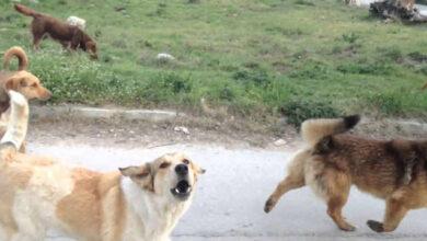 Photo of Τραγωδία στη Θεσσαλονίκη: Αγέλη σκύλων κατασπάραξε 65χρονο
