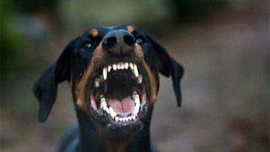 Photo of Θεσσαλονίκη: Αγέλη αδέσποτων σκύλων στο Σέιχ Σου, έστειλε 22χρονο στο νοσοκομείο