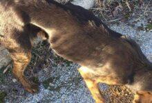 Photo of Αμύνταιο Φλώρινας: Απαγόρευσαν τη σίτιση σκελετωμένων σκύλων! (Photos)