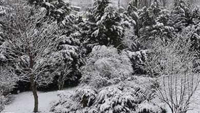 Photo of Στους -13 στα Γρεβενά, -11 στο Βαρικό Φλώρινας και η Πτολεμαΐδα ξημέρωσε με -10 βαθμούς Κελσίου.