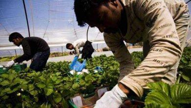 Photo of «ΟΑΕΔ… μεταναστών» : Το σχέδιο της κυβέρνησης για αγροτικές δουλειές σε χιλιάδες αλλοδαπούς