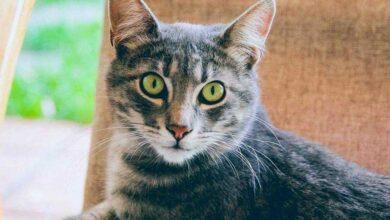 Photo of Κορονοϊός – Έρευνα: Οι γάτες κολλάνε – μεταδίδουν τον ιό!