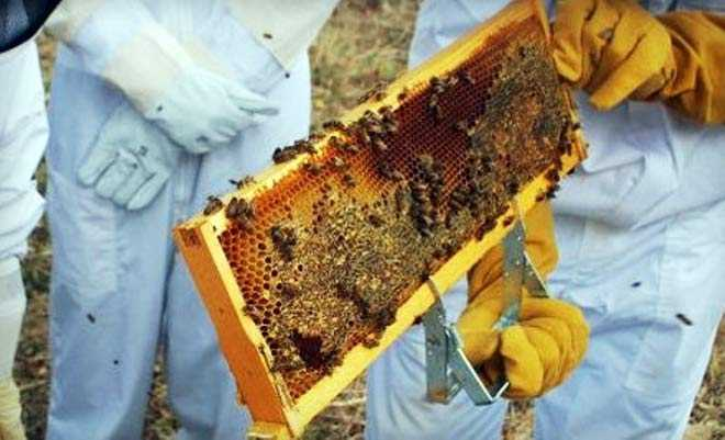 Photo of ΕΦΕΤ: Ανακαλούνται αυτά τα μέλια