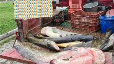 Photo of Εξαρθρώθηκε κύκλωμα λαθραλιέων στην Άρνισσα